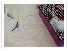 ploppandbirds.jpg