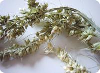 hayseeds.jpg